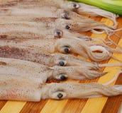 Frischer Calamari stockfotos