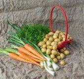 Frischer Dill, Frühlingszwiebeln und Kartoffeln mit Vorderansicht der Karotte Lizenzfreie Stockfotografie