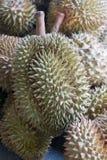 Frischer Durian Stockbild