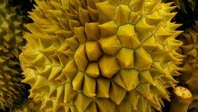 Frischer Durian stockfoto