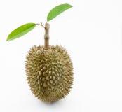 Frischer Durian mit Blatt Stockbild