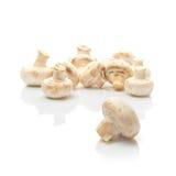 Frischer essbarer Portabello-Pilz-Champignon über weißem backgroun Lizenzfreies Stockbild
