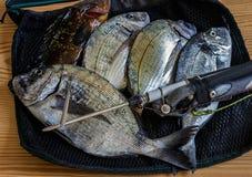 Frischer Fang des großen Meeresfisches liegend auf einer Maschentasche Stockfotografie