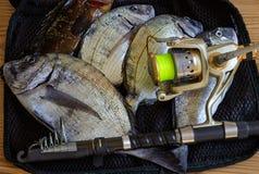 Frischer Fang des großen Meeresfisches liegend auf einer Maschentasche Stockfoto