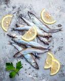 Frischer Fang Shishamo-Fisch ärgert völlig flache Lage auf schäbigem Metallba Stockbilder