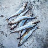 Frischer Fang Shishamo-Fisch ärgert völlig flache Lage auf schäbigem Metallba Stockfoto