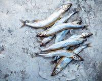 Frischer Fang Shishamo-Fisch ärgert völlig flache Lage auf schäbigem Metallba Stockfotografie