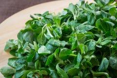 Frischer Feldsalat-Feldsalat auf Holztisch Lizenzfreie Stockbilder