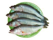 Frischer Fisch ist Stange auf einer Platte Stockfotos