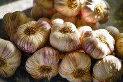 Frischer französischer violetter und rosafarbener Knoblauch von Provence, Frankreich lizenzfreies stockbild