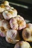 Frischer französischer violetter und rosafarbener Knoblauch von Provence, Frankreich lizenzfreies stockfoto