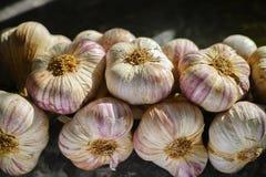 Frischer französischer violetter und rosafarbener Knoblauch von Provence, Frankreich lizenzfreie stockbilder