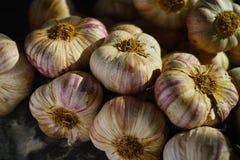 Frischer französischer violetter und rosafarbener Knoblauch von Provence, Frankreich stockfotografie