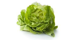 Frischer Gartenkopfsalat Stockfoto