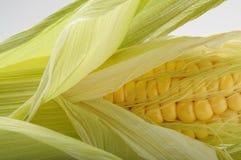 Frischer geöffneter Maiskolben stockfotos