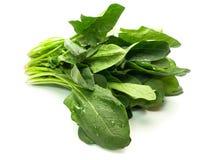 Frischer geernteter Spinat getrennt auf Weiß Lizenzfreie Stockfotografie