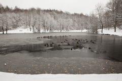 Frischer gefrorener Teich mit Enten Stockfotos