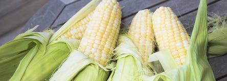 Frischer geschälter Mais Stockfoto