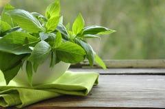 Frischer grüner Basilikum lizenzfreies stockbild