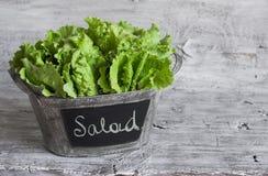 Frischer grüner Blattkopfsalat in einem Weinleseeimer Stockfotografie