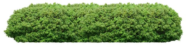 Frischer grüner Busch lokalisiert auf weißem Hintergrund stockfotografie