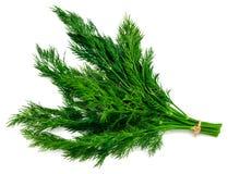 frischer grüner Dill des Bündels lokalisiert auf weißem Hintergrund stockbilder