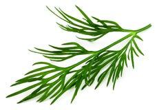 Frischer grüner Dill lokalisiert auf weißem Hintergrund Makro lizenzfreies stockfoto