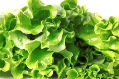 Frischer grüner Kopfsalat lizenzfreies stockfoto
