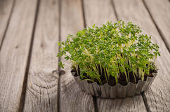 Frischer grüner Kressesalat auf dem rustikalen Hintergrund Stockfotos