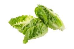 Frischer grüner Lattich lokalisiert auf weißem Hintergrund Lizenzfreie Stockfotografie
