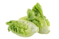 Frischer grüner Lattich lokalisiert auf weißem Hintergrund Stockfotos