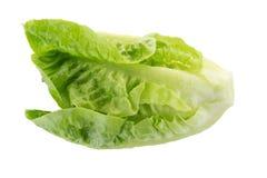 Frischer grüner Lattich lokalisiert auf weißem Hintergrund Lizenzfreies Stockbild