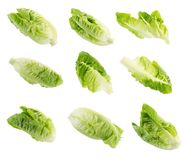 Frischer grüner Lattich lokalisiert auf weißem Hintergrund Stockbilder