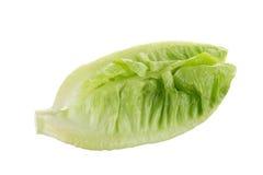 Frischer grüner Lattich lokalisiert auf weißem Hintergrund Lizenzfreie Stockfotos