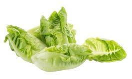 Frischer grüner Lattich lokalisiert auf weißem Hintergrund Lizenzfreie Stockbilder