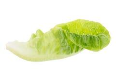 Frischer grüner Lattich lokalisiert auf weißem Hintergrund Stockbild
