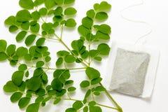 Frischer grüner Moringa-Stamm und Teebeutel Stockbild
