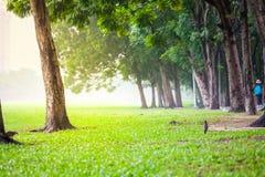 Frischer grüner Park in einer Stadt Stockbilder