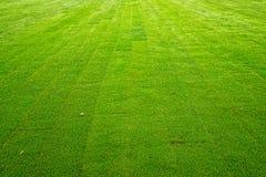 Frischer grüner Rasen Stockfotos
