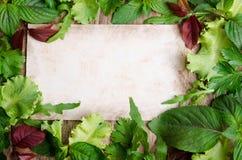 Frischer grüner Salat auf dem Rahmen Stockbild