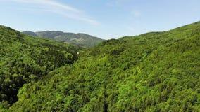 Frischer grüner Wald während des Frühjahres stock video