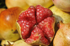 Frischer Granatapfel Stockbild