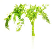 Frischer grüner Dill getrennt auf Weiß Lizenzfreie Stockfotos