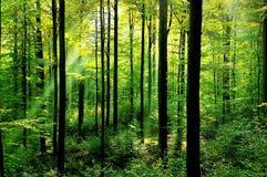 Frischer grüner Wald Stockbild