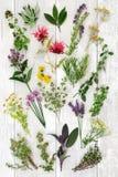 Frischer Herb Abstract Background Stockbild