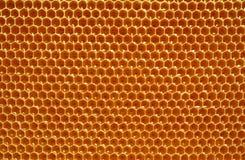 Frischer Honig in den Zellen Lizenzfreies Stockfoto