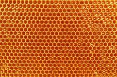 Frischer Honig in den Zellen, Bienenwabe Lizenzfreie Stockbilder
