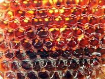 Frischer Honig im Kamm. Stockfotografie