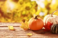 Frischer Kürbis und Kürbis in einem Herbst arbeiten im Garten Lizenzfreies Stockbild