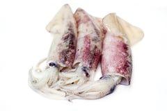 Frischer Kalmar auf weißem Hintergrund Lizenzfreies Stockbild